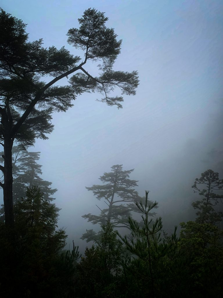 Forest draped in fog